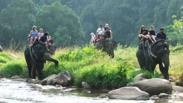 Jungle elephant trekking 45 minutes